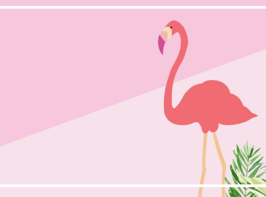 flamingo contrast color fresh ins_925425