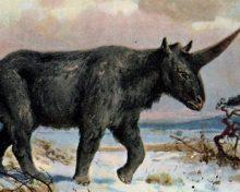 Oui, les licornes existaient, mais pas comme nous les avions imaginées