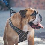 Comment choisir un collier de dressage pour chien ?