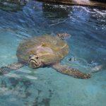 Rencontrer toute la famille des tortues de bassin