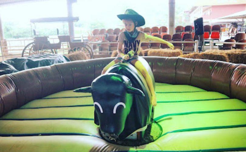 taureau-mecanique-gonflabe